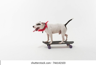 Dog Skater Images Stock Photos Vectors Shutterstock