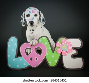 Very cute Dalmatian puppy with a love, peace sign with hearts painted on her face, on a black background.