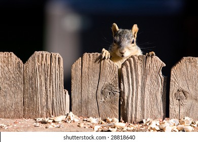 A very cute squirrel looking over a wood fence.