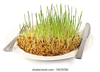 Very delicious vitamins. Germinating grain on a dish with a knife and fork on a white background