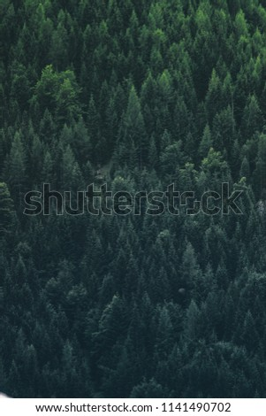A very dense location of the mountain forest on the alpine altitude. I simply love nature and I take photographs of it, whenever I can.