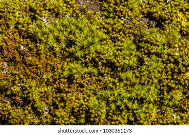 Very detailed macro texture of green moss