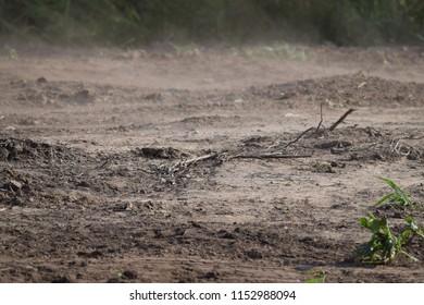 very dusty Topsoil