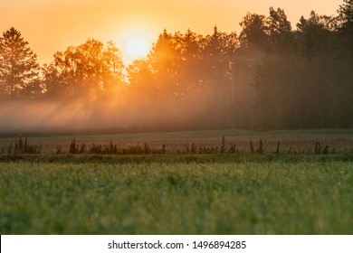 Very early morning - the Sun Rays lights through very hazy air just above forest and grass field from red orange sky, no clouds. Stocksjo village, close to Umea City, Vasterbotten County, Sweden