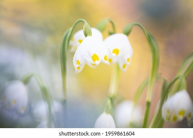 The very first Spring flowers - Shutterstock ID 1959861604