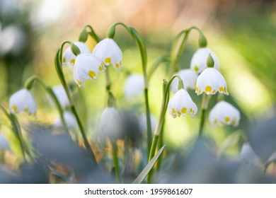 The very first Spring flowers - Shutterstock ID 1959861607