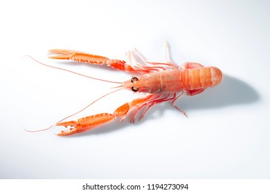 very fresh langoustine on light background