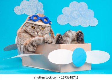 Very funny cat pilot of an airplane with glasses and a pilot's hat sitting on a plane, against the background of clouds. Concept of funny and funny animals