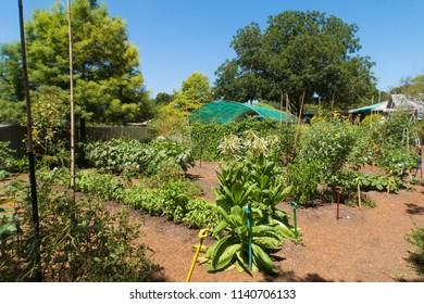 a very green nursery in Austin Texas