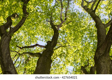 Very green shiny tree, ElbgaustraÃ??e, Hamburg, Germany