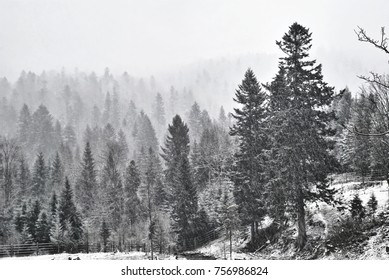 Very heavy and hard flurry in the mountains, fog and snow, limited visibility, dangerous weather. Snowing hard. Trees covered in heavy snow. Dark landscape. Natural disaster.