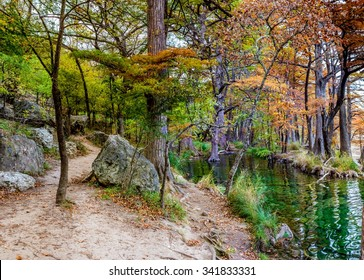A Very High Resolution Panoramic View of Giant Bald Cypress Trees with Beautiful Bright Orange Fall Foliage Lining the Frio River at Garner State Park, Texas.