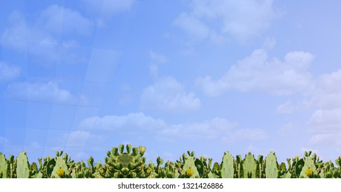 A very interesting banner with cacti at the bottom of the page and soft blue background with white clouds for celebrity cards and web design.