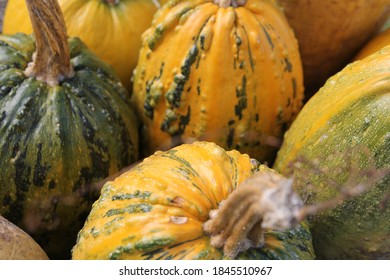 Very interesting pumpkins, suitable for both Halloween and consumption