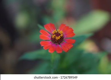 very interesting red flower that is seen from take it