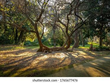 Very interesting tree in an italian park