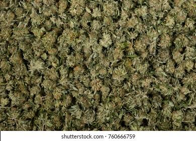 A very Large Pile Of Marijuana Buds ready to smoke