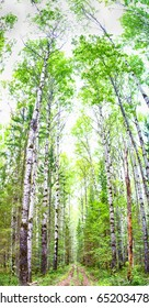 Very large vertical panorama of a thick virgin forest, with both coniferous and deciduous trees.