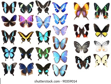 Very Many blue butterflies isolated on white background
