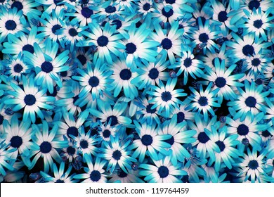 very nice blue flowers background