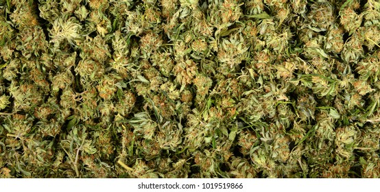 Very nice panoramic Image of a tableful Of marijuana