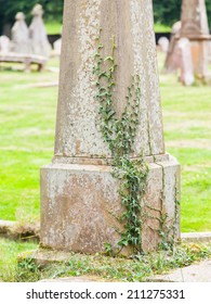 Very old gravestone with green leaves, cemetery in Scotland