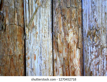 Very old hand-hewn boards on a cottage tree house in the Florida Keys with the bark still on them.