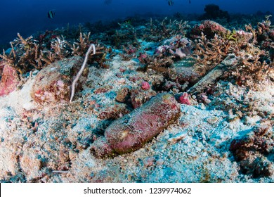 A very old, non biodegradable plastic bottle on the sea floor on a tropical coral reef