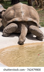 a very old tortoise