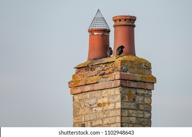 Very old twin chimney and pots seen atop a decaying and heavily weathered brick smokestack. Roosting birds can be seen atop the smokestack, with one having a nest in a non protected pot.