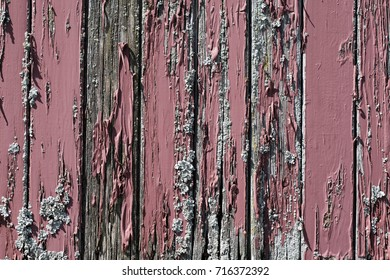 A very old and weathered, painted wood plank wall covered with lichen.