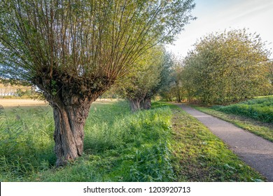Very old willow tree next to a path in an atmospheric  Dutch park in the Oranjepolder in Oosterhout, North Brabant. It is a sunny day in the beginning of the autumn season in the Netherlands.