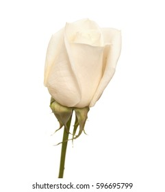 very pale pink rose bud isolated on white