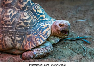 Very pretty turtle opening its mouth