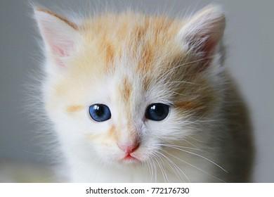 Very sad blue-eyed kitten