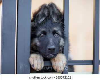 Very sad puppy in shelter