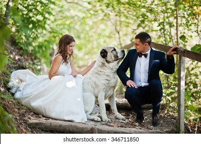 Very sensual and gorgeous wedding couple on the picturesque landscapes with big dog