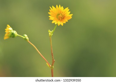 A very simplistic shot of a yellow flower, Daisy probably.  With a green blurred background, focus is drawn on the minimalistic flower, yet powerful in its beauty.  Sometimes we can find yellow magic.