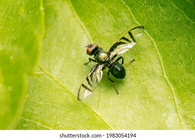 Very small fly on a green leaf with copy space