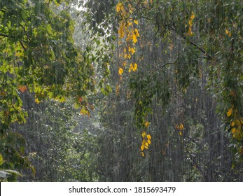 Very strong downpour with the tree foliage on the background