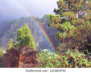 A very strong and wide rainbow in the mountains of La Palma (Canary Island). He comes out of the trees and rises straight up, the sun is shining and the trees are standing in the sunlight.