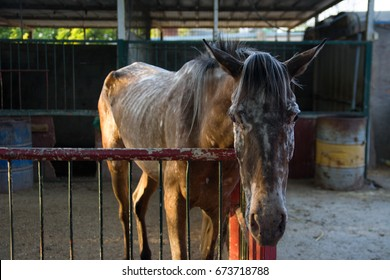 Very thin horse in the pen, hunger, suffering of animals