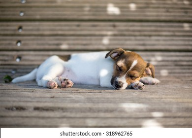 a very young sleepy puppy is taking a nap on a bench