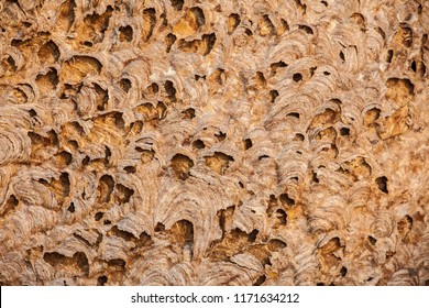 Vespirary or wasp nest background, closeup from a grey and brown nature texture.