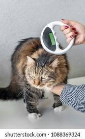The vet checks the microchip on a cat with Microchip Scanner in a veterinary clinic. Animal ID
