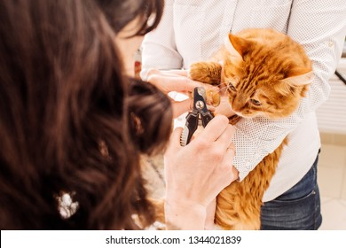 vet cuts the nails of the cat. medicine, pet, animals, health care and people concept