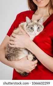 vet doctor holding small cat on white background