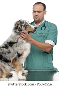 Vet examining an Australian Shepherd in front of white background