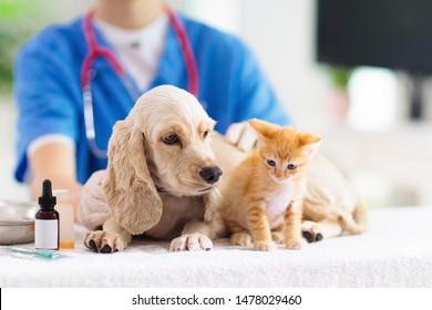 Tierärztin, die Hund und Katze untersucht. Welpen und Kätzchen beim Tierarzt. Tierklinik. Haustier-Check-up und Impfung. Gesundheitsfürsorge.