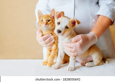 Vet examining dog and cat. Puppy and kitten at veterinarian doctor. Animal clinic. Pet check up and vaccination. Health care.